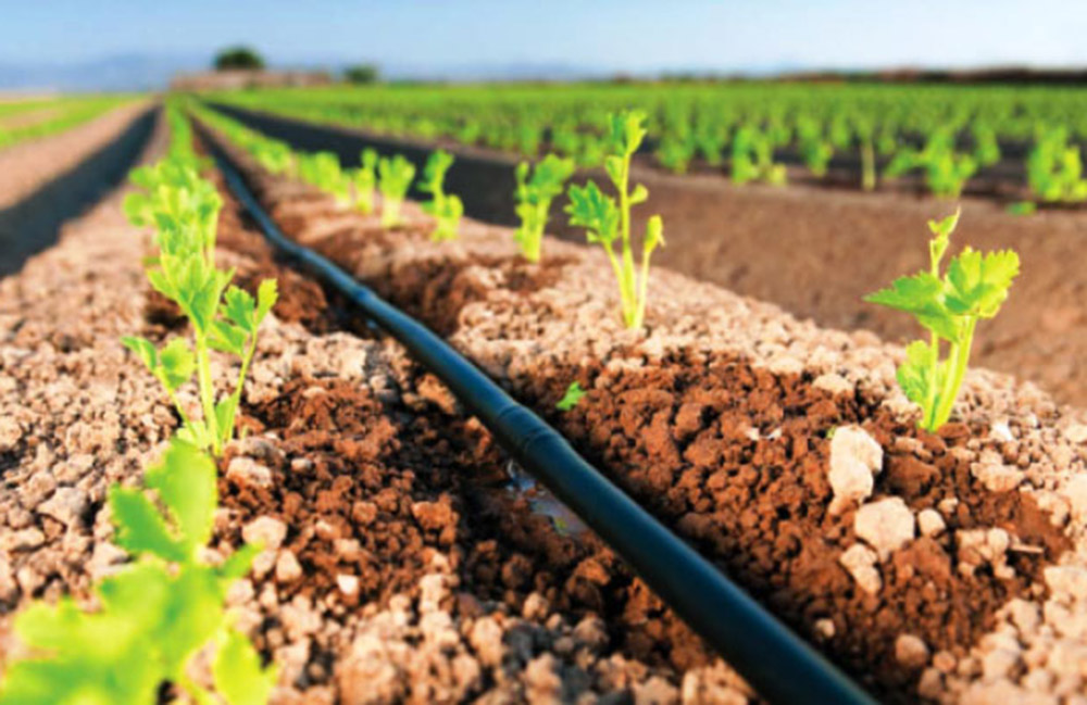 Home Irrigation System Cost